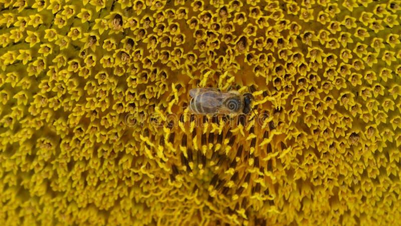Pszczół pracy zdjęcia royalty free