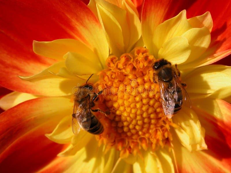 pszczela drużyna pracy zdjęcie stock