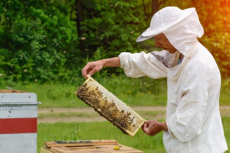 Pszczelarka bierze out od roju honeycomb wypełniającego z świeżym miodem Apiculture zdjęcia stock