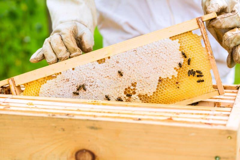 Pszczelarka kontroluje beeyard i pszczoły obrazy royalty free