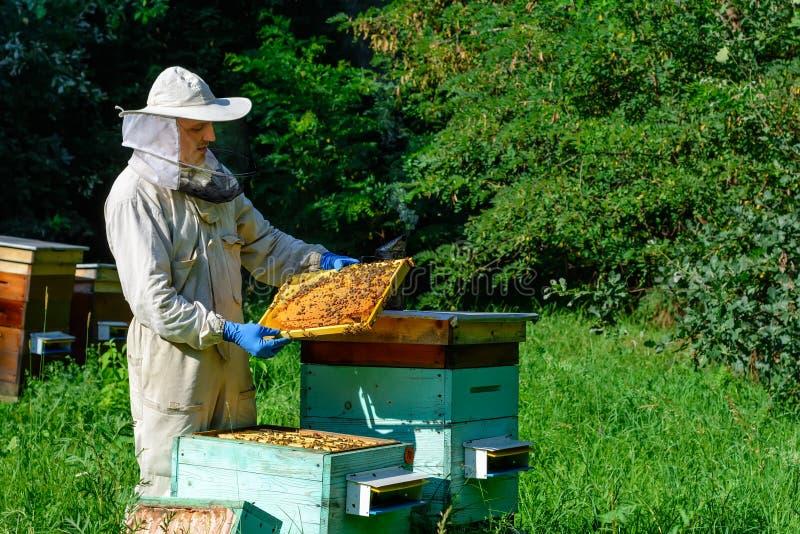 Pszczelarka na pasiece Pszczelarka pracuje z pszczołami i ulami na pasiece Apiculture pojęcie zdjęcie royalty free