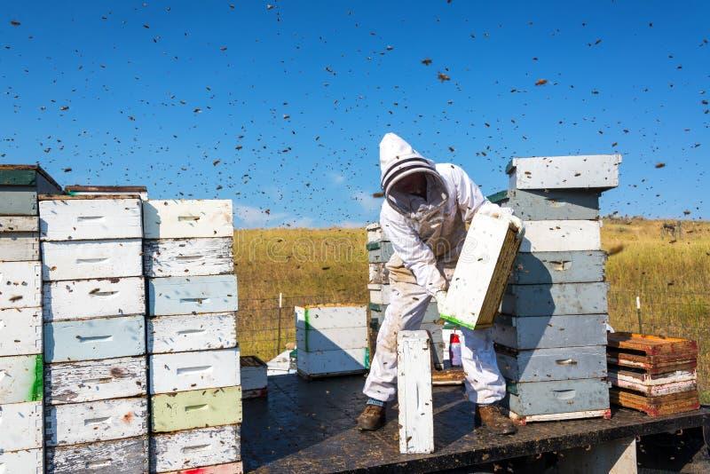 Pszczelarka Otaczająca pszczołami fotografia royalty free