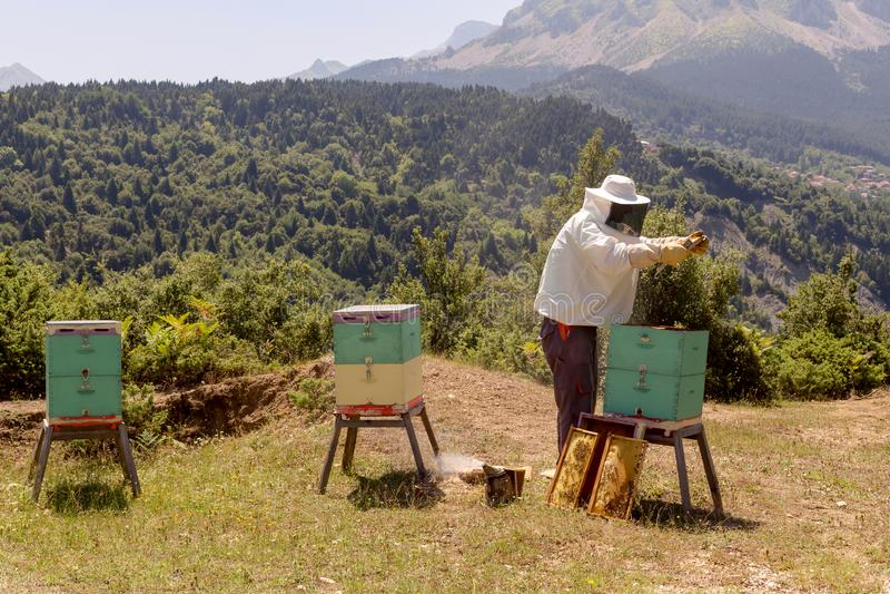 Pszczelarka przy pracą w górach zdjęcia royalty free