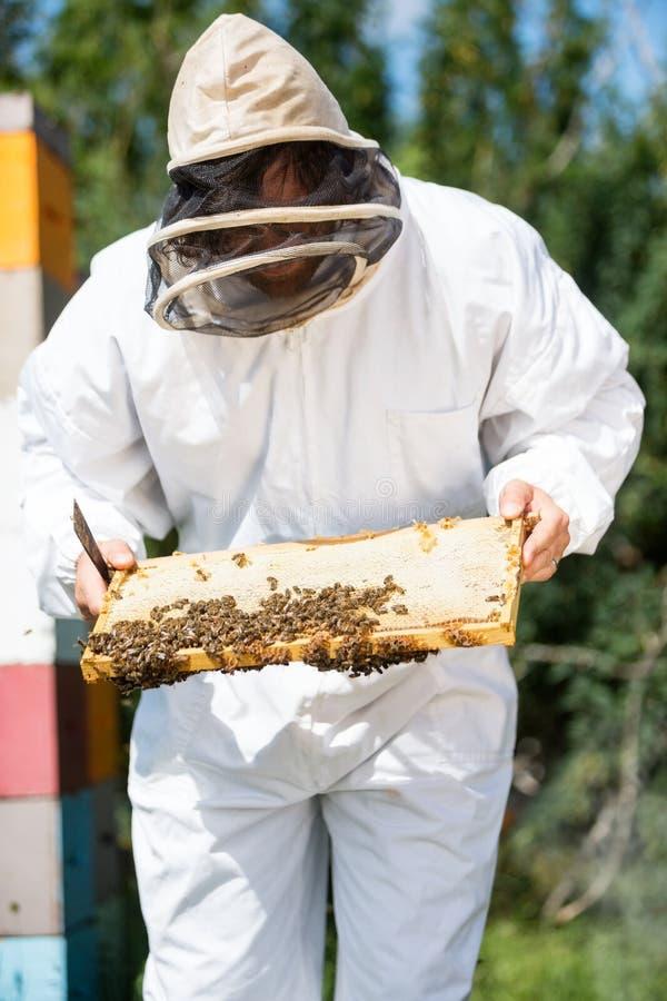 Pszczelarka Sprawdza Honeycomb ramę Na gospodarstwie rolnym obraz royalty free