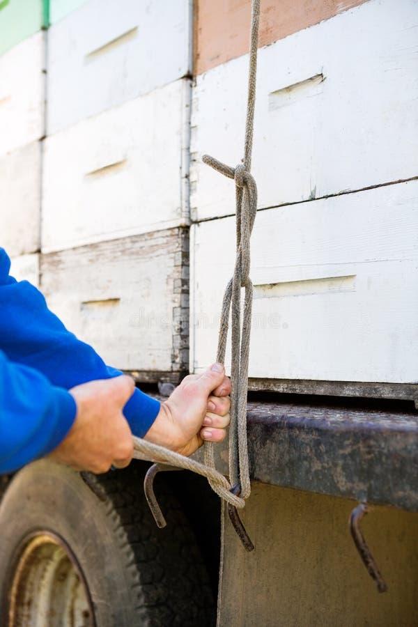 Pszczelarka Wiąże Brogować Honeycomb skrzynki Na ciężarówce obrazy stock