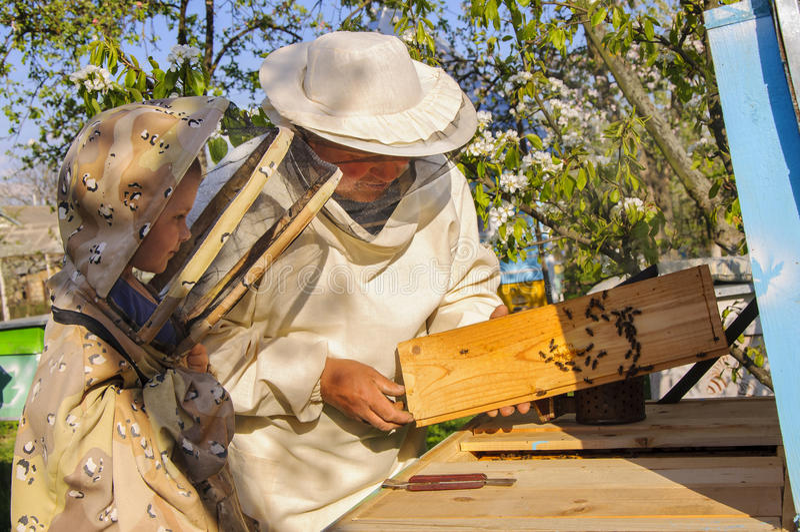 Pszczelarka wnuk i dziad egzamininujemy rój pszczoły fotografia stock