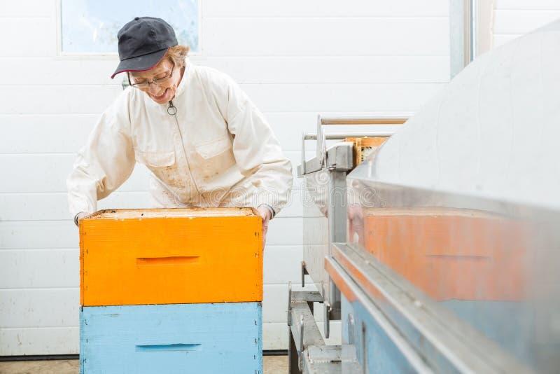 Pszczelarka Z Honeycomb skrzynkami Przy fabryką obraz royalty free