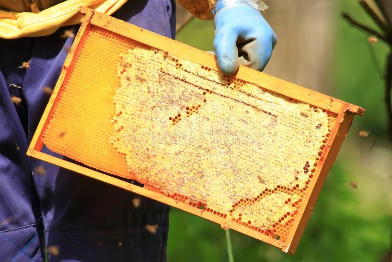 Pszczelarka z honeycomb obraz royalty free