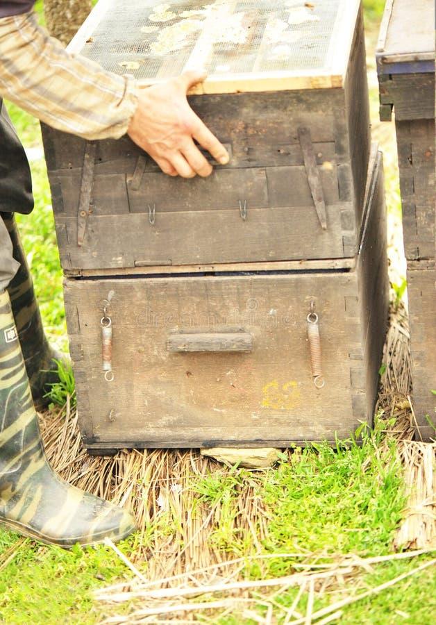 pszczelarki działanie zdjęcie stock