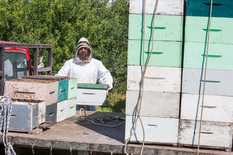 Pszczelarki Honeycomb Ładownicza skrzynka W ciężarówce zdjęcia royalty free
