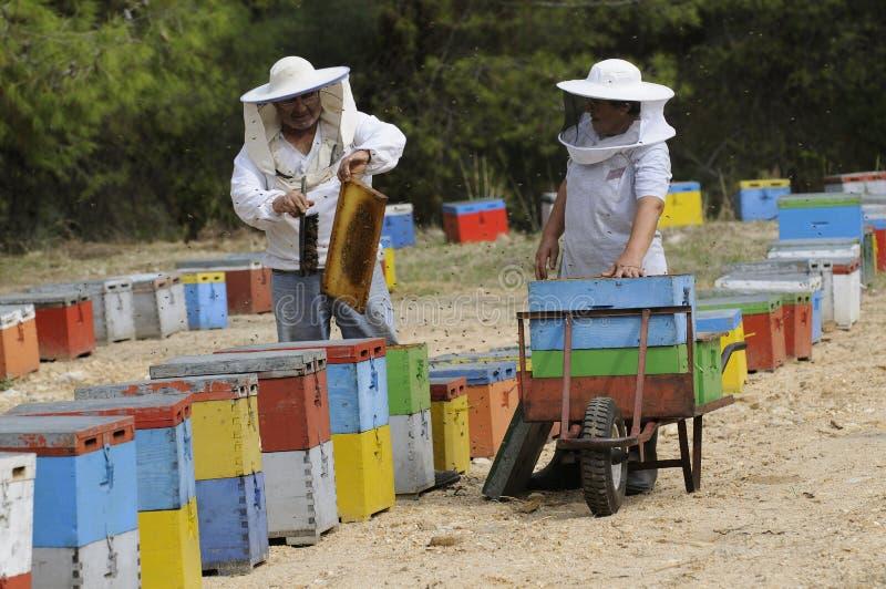 Pszczelarki pracuje z ich colourful rojami obrazy stock