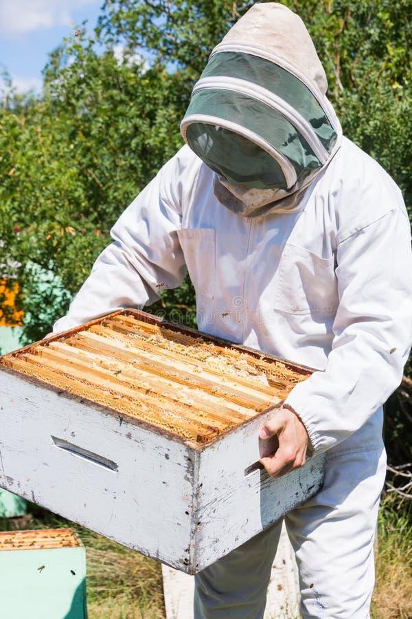 Pszczelarki przewożenia Honeycomb skrzynka Przy pasieką obrazy stock