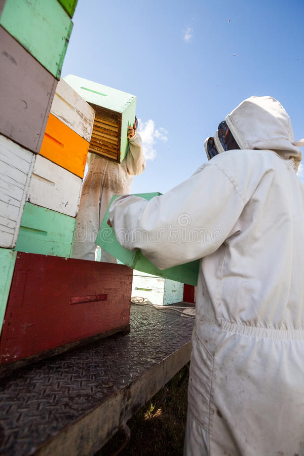 Pszczelarki Rozładowywa Honeycomb skrzynki fotografia royalty free