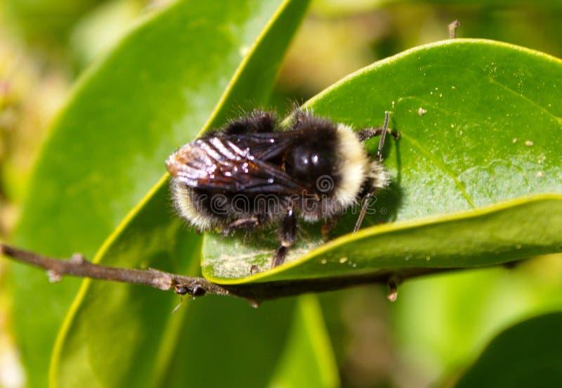 Pszczoła dobra ty zdjęcia stock