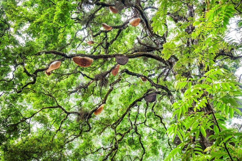 Pszczoła domy na drzewie zdjęcie royalty free