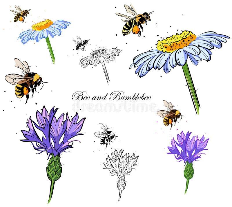 Pszczoła i bumblebee ilustracja wektor