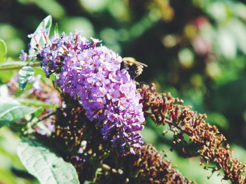 Pszczoła i gość restauracji zdjęcia stock