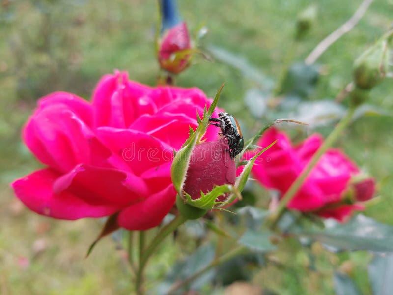 Pszczoła i swój wzrastał fotografia royalty free