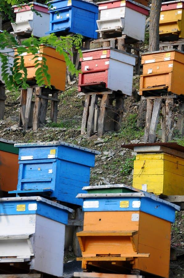 Pszczoła jard na wzgórzu w Bułgaria obraz stock
