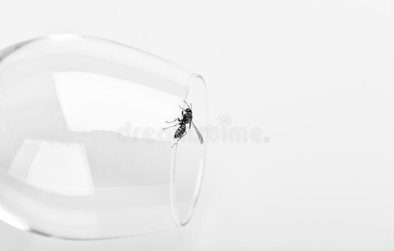 Pszczoła lub osa na szklanym białym tle Słodki naturalny nektar Zdrowy jedzenie i stylu życia pojęcie Naturalny i organicznie fotografia stock