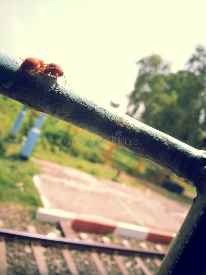 Pszczoła nad barem zdjęcia stock