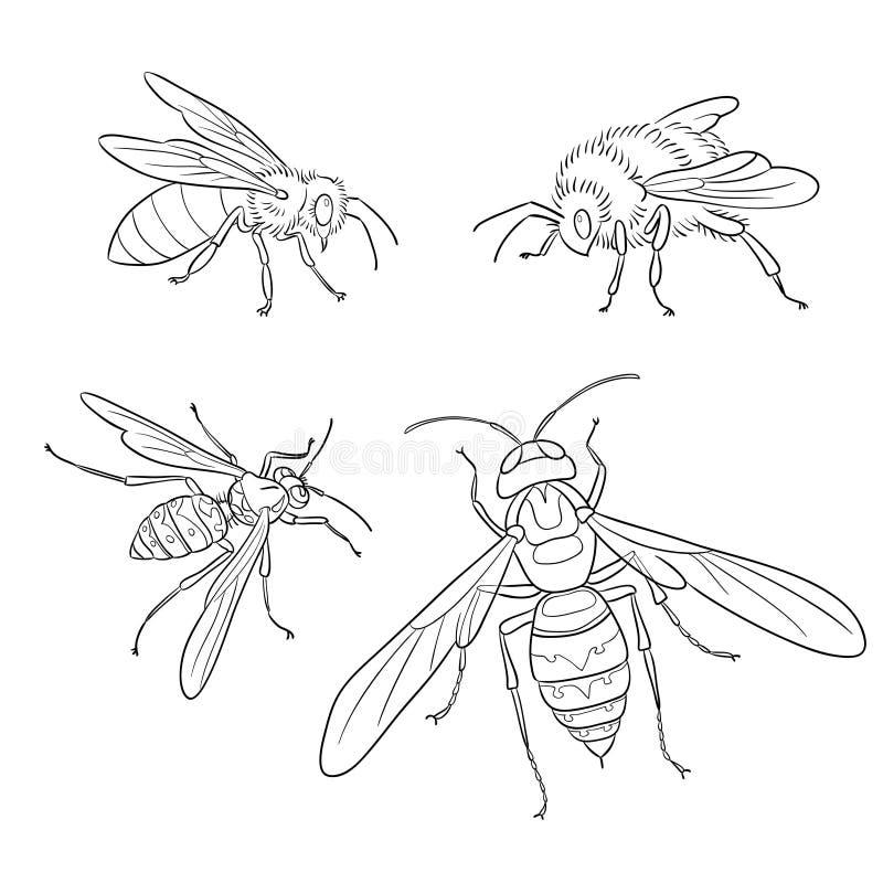 Pszczoła, osa, bumblebee, szerszeń w konturach - wektorowa ilustracja ilustracji
