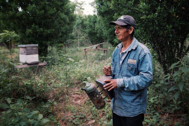 pszczoła pastuch i dumny kawy gospodarstwa rolnego właściciela narządzanie zbierać jeden jego rój z pompować dymną kiść zdjęcia stock