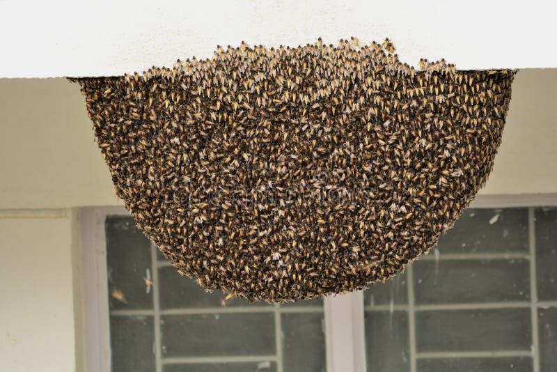 Pszczoła rój na betonowym budynku przy miastową lokacją z zamkniętymi okno zdjęcia stock