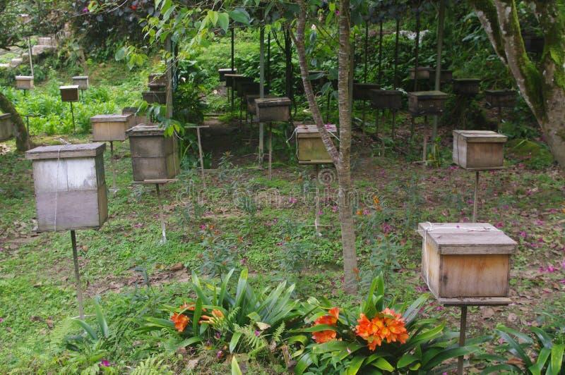 Pszczoły gospodarstwo rolne zdjęcie royalty free