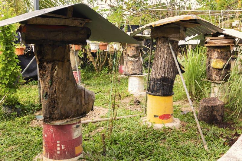 Pszczoły gospodarstwo rolne cieśli genus xylocopa - pasieka z ulami od starych fiszorków dla czarnych pszczół - zdjęcie royalty free