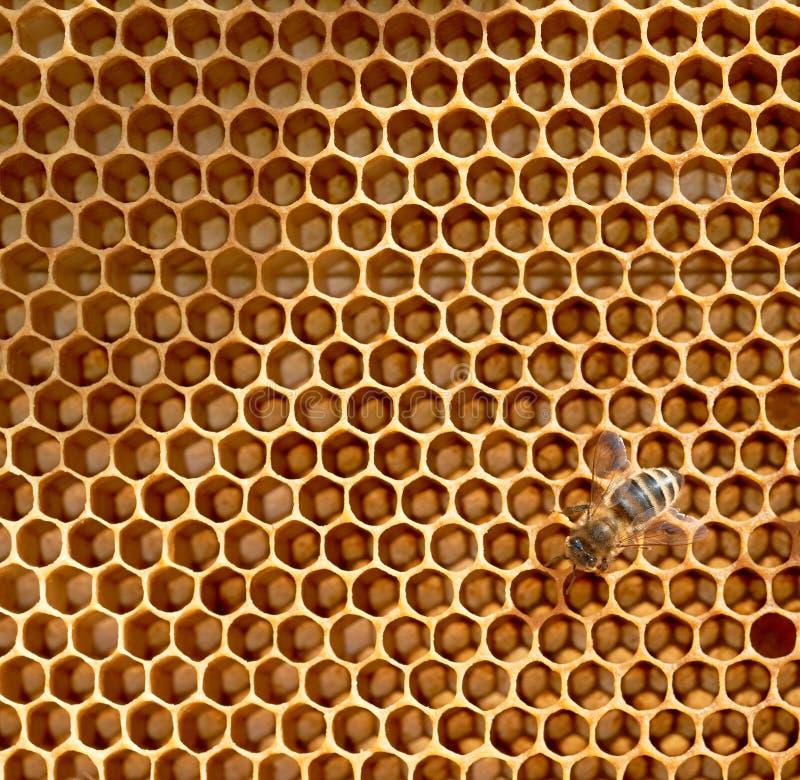 pszczoły honeycomb obraz stock
