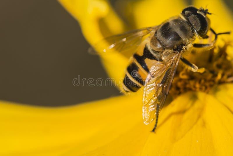 Pszczoły i kwiaty obrazy royalty free