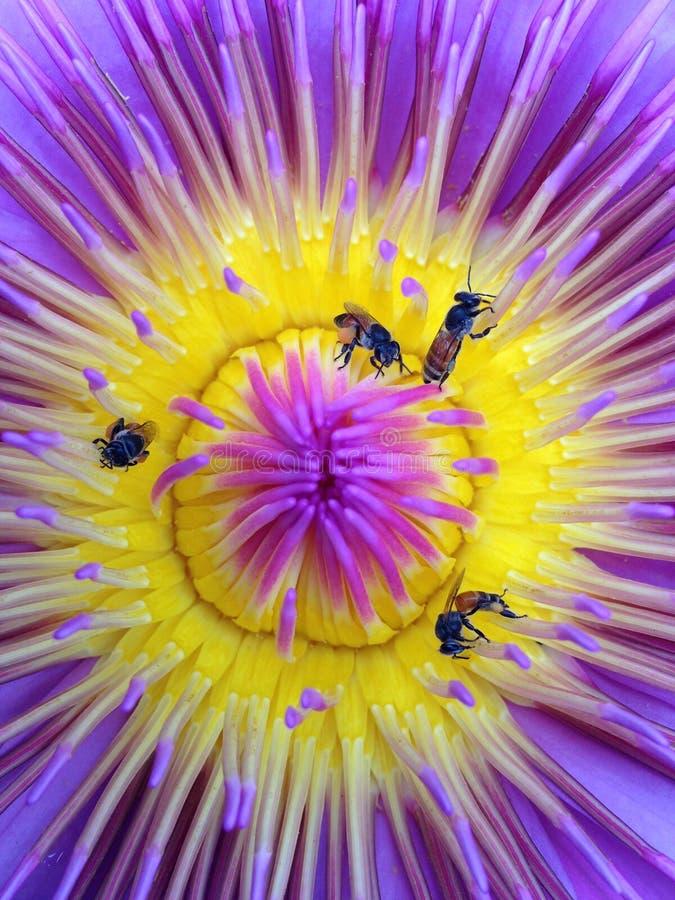 Pszczoły i leluje. zdjęcia royalty free