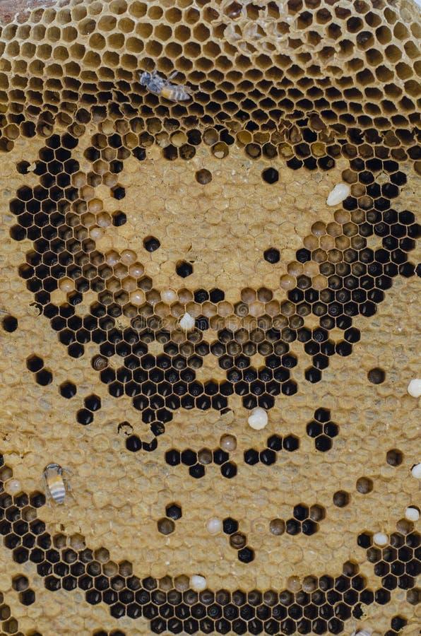 Pszczoły i miód obraz stock