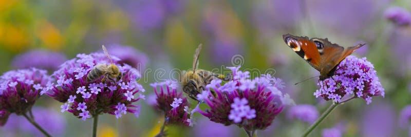 Pszczoły i motyl na kwiacie zdjęcia royalty free