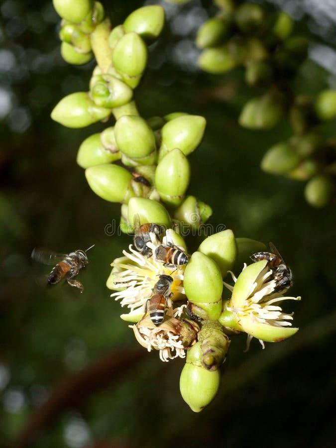 Pszczoły i palmy kwiaty fotografia royalty free