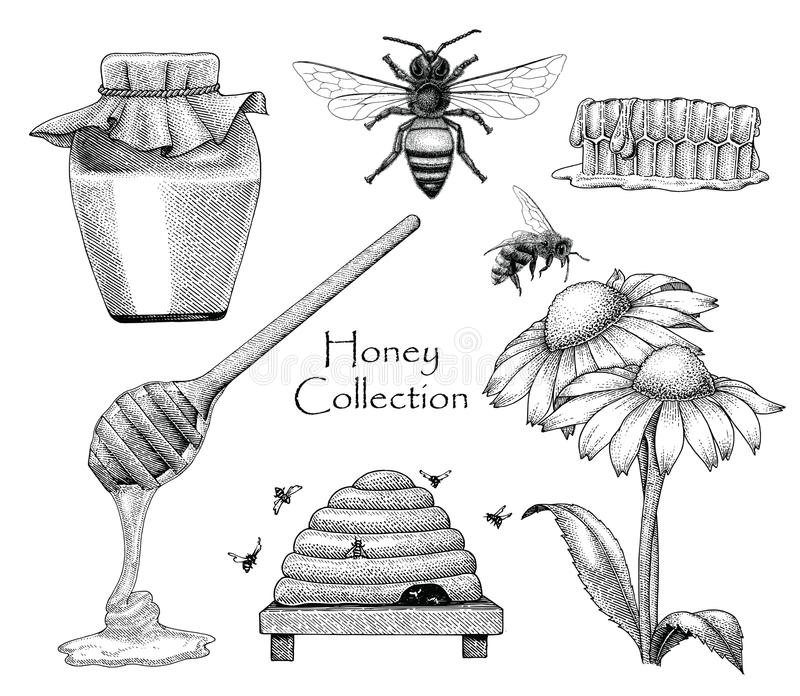 Pszczoły kolekci ustalonej ręki rytownictwa rysunkowy styl na białym backgro royalty ilustracja