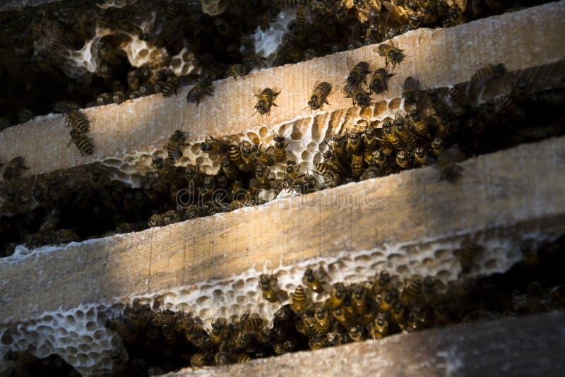 Pszczoły lata od otwartego roju w Wietnam słonecznym dniu zdjęcia royalty free