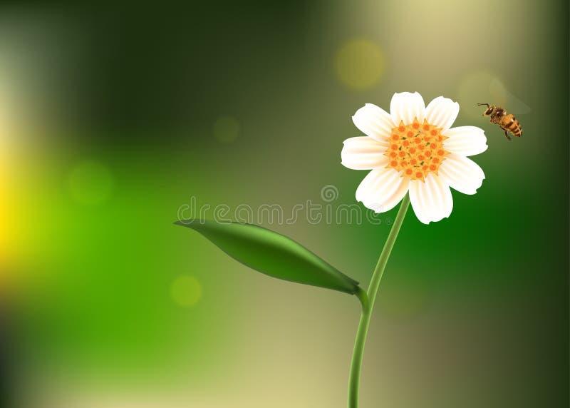 Pszczoły latanie wokoło kwiatu ogródu ilustracja wektor