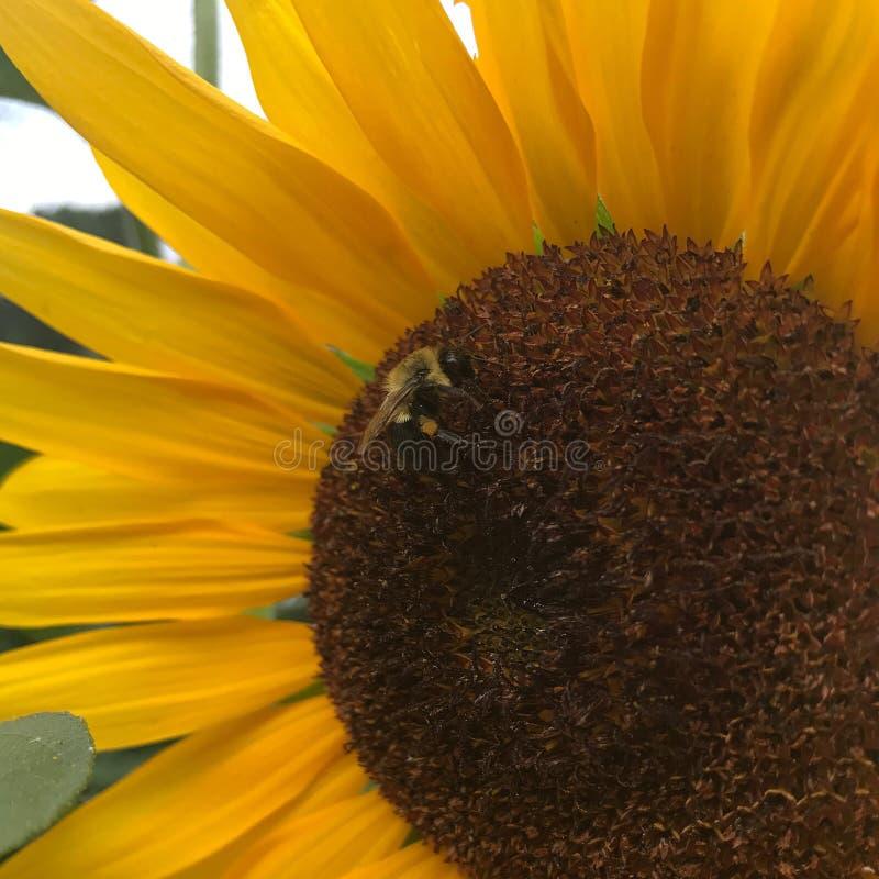 Pszczoły miłość obrazy stock