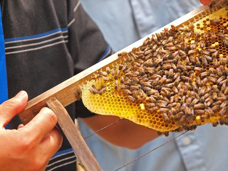 pszczoły miodu galareta królewska obraz stock