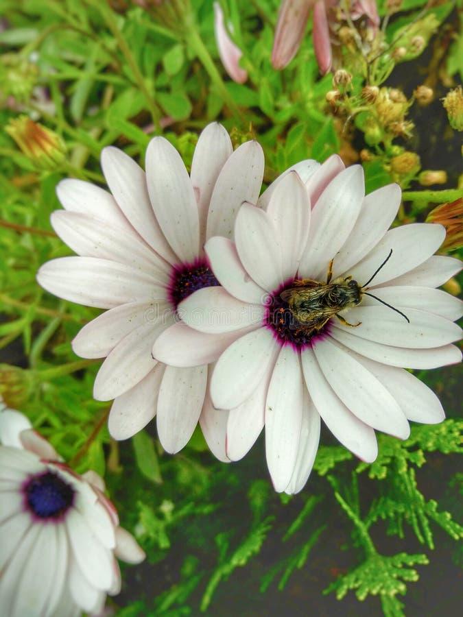 Pszczoły na śniadanie zdjęcie royalty free