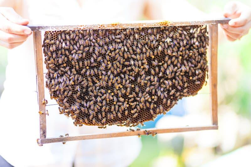 Pszczoły na miodowych komórkach, Wietnam fotografia royalty free