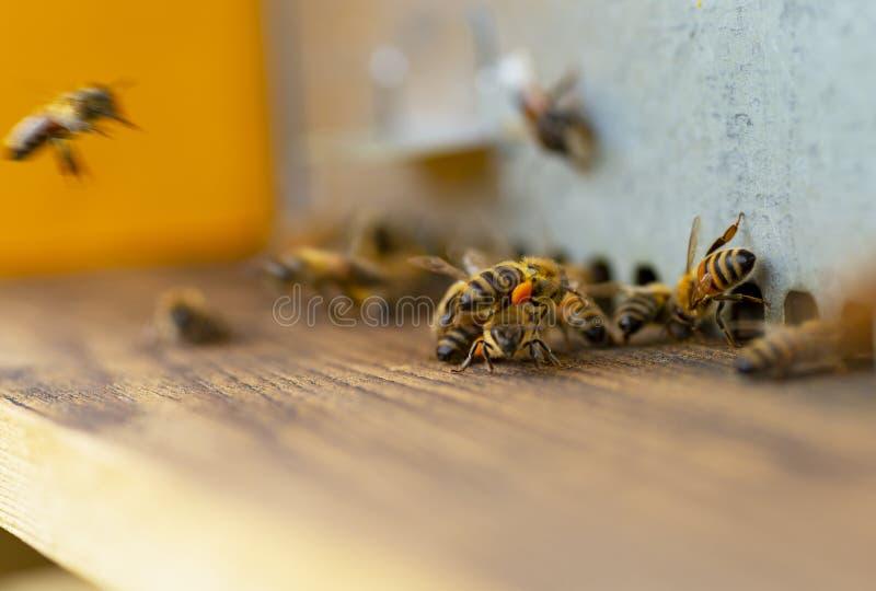 Pszczoły na roju wejściowym ruchu drogowym fotografia royalty free
