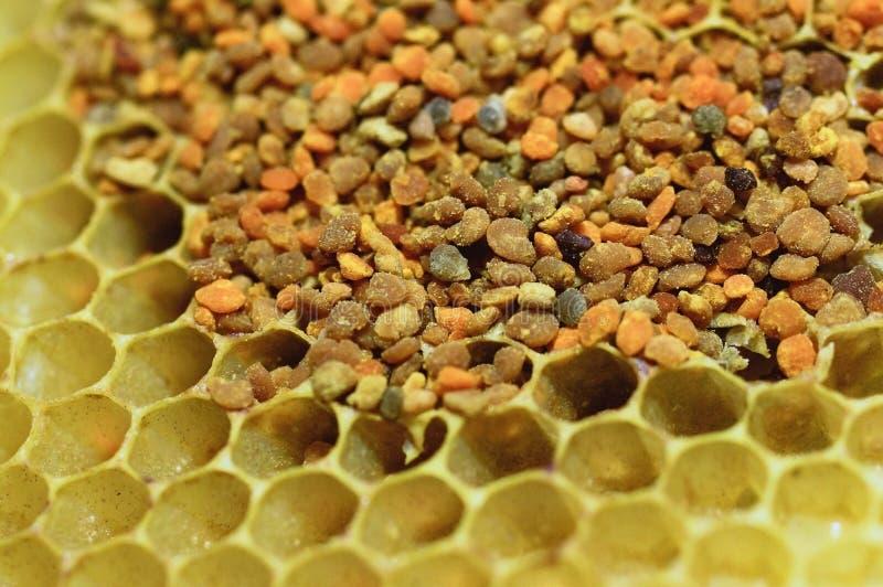 pszczoły pollen obrazy royalty free