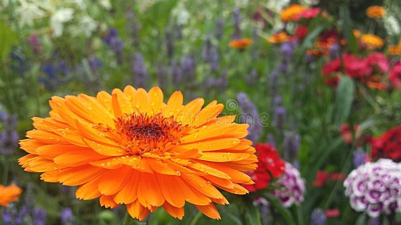 Pszczoły ` s widok fotografia stock