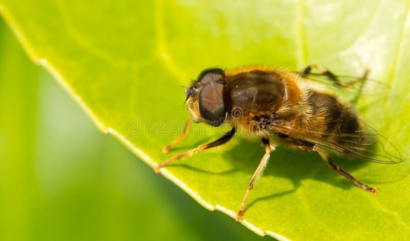 pszczoły target4384_0_ obrazy royalty free