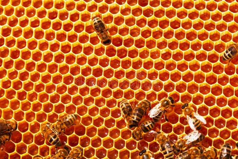 pszczoły zamykają w górę działania honeycombs wizerunek obraz stock