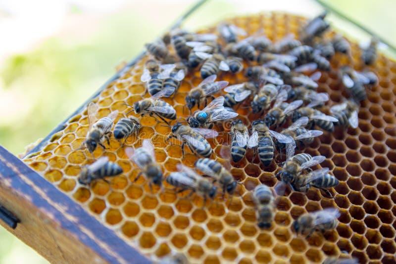 pszczoły zamykają w górę pracownika honeycomb wizerunek obrazy stock