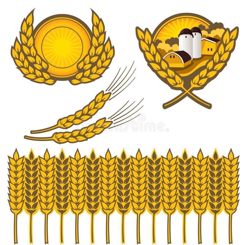 pszenica ilustracji
